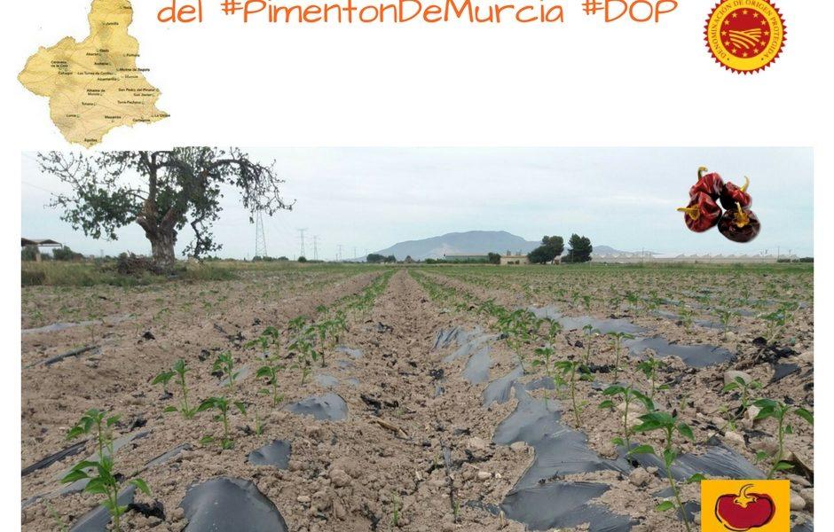 Campaña Pimentón de Murcia 2017-18
