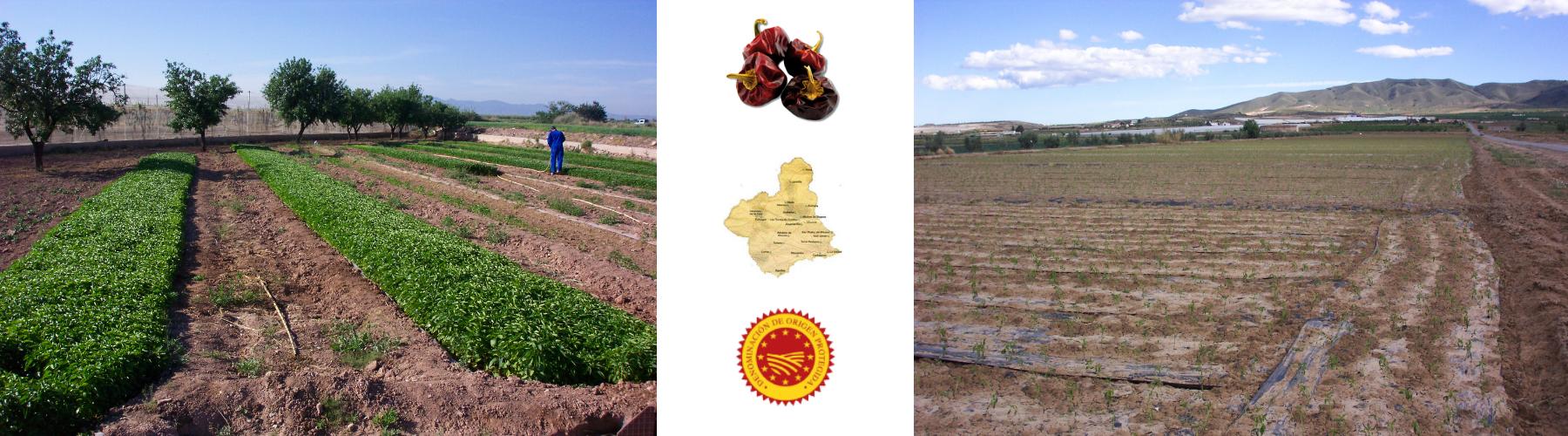 Consejo Regulador del Pimentón de Murcia